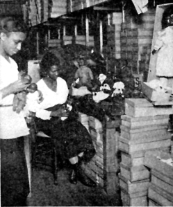 A Negro doll factory in Harlem which provides colored dolls for Negro children. (1929)